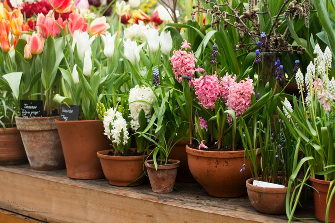 Group of spring flowers in a ceramic pots