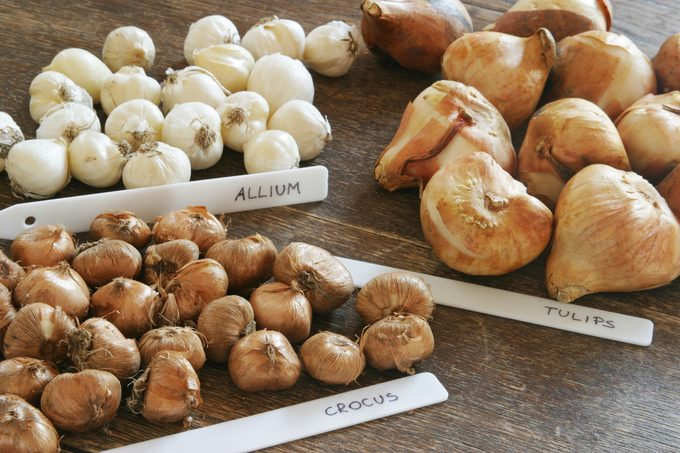 bulbs sorted by type sitting next to their labels on a wood table