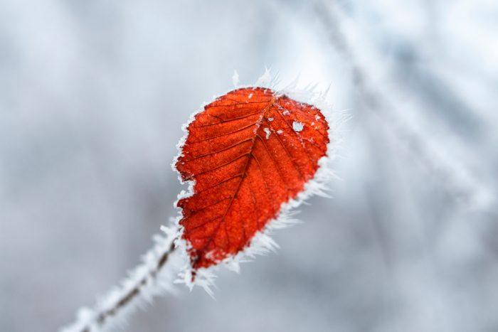 the last leaf on a winter tree