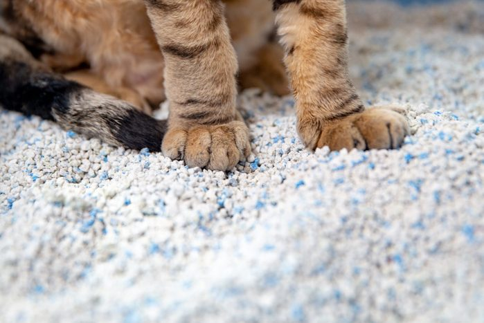 close up of cat's paws in litter box