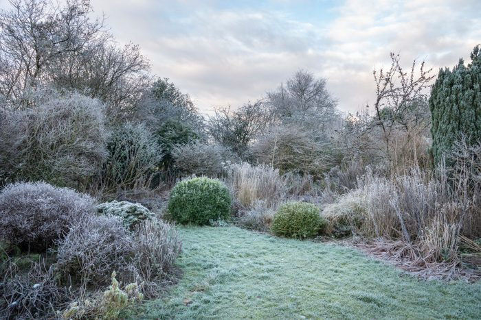 back yard covered in frost from the winter cold