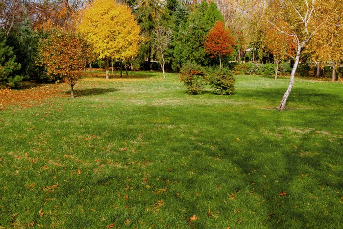 backyard during autumn with colorful trees and grass