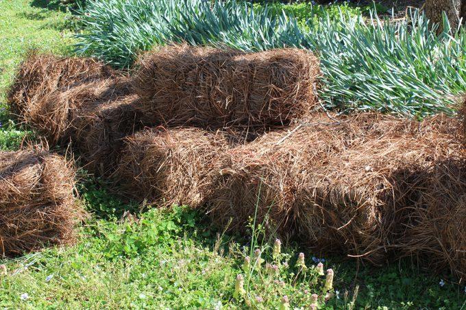 Bales of pine straw mulch
