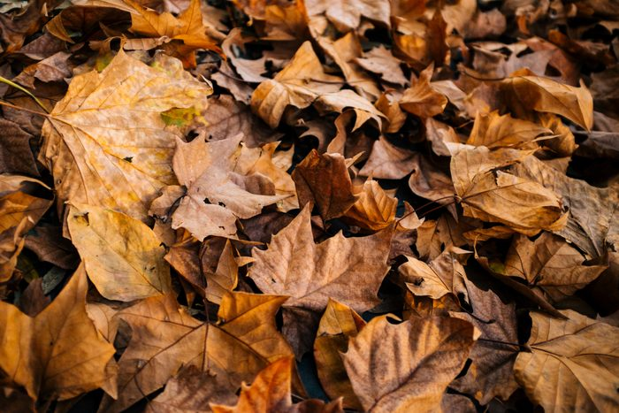 pile of drying leaves